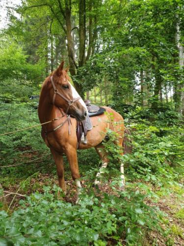 forest-sisko-belgique (3)